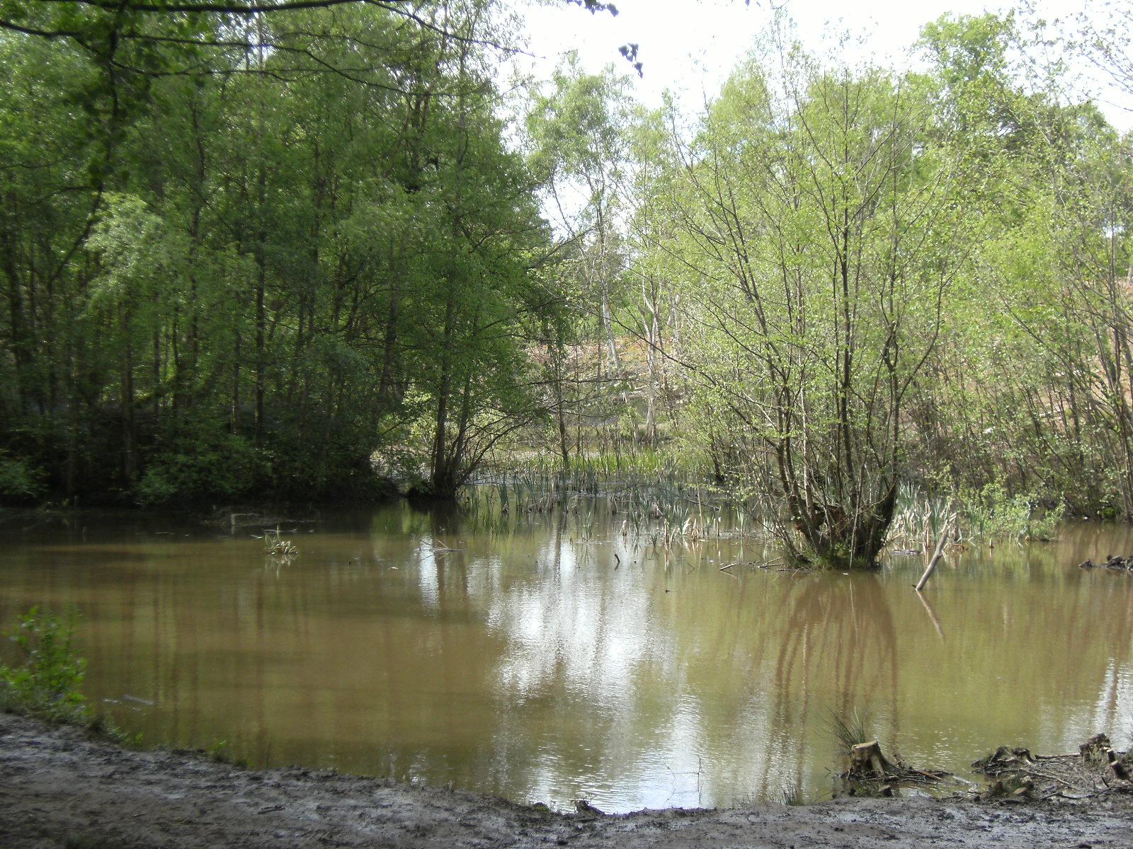 DSCF7845 Decoy Pond, Broadwater Warren