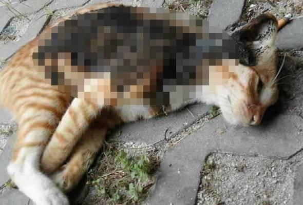 Kucing dibunuh kejam sebelum dijadikan juadah