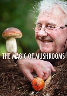 The Magic Of Mushrooms - Sự Kỳ Diệu Của Nấm