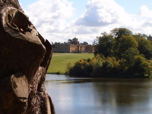 tree lake and blenheim palace