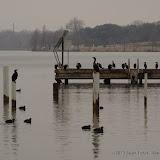 01-26-13 White Rock Lake - IMGP4303.JPG