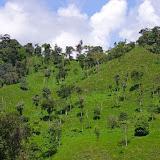 Déforestation au-dessus de San Miguel de Chontal, Intag (Imbabura, Équateur), 18 novembre 2013. Photo : J.-M. Gayman