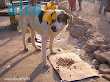 1era visita asistencia animales damnificados terremoto  Pisco 2007 (6)