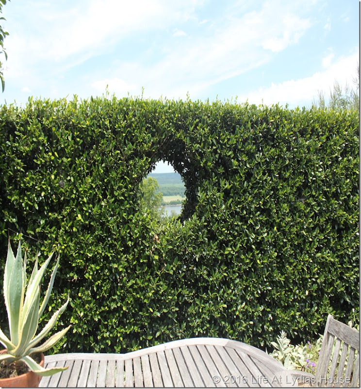 window in the hedge wall 2