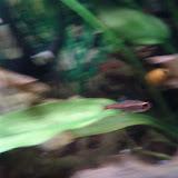 Fish - IMG_20121015_192445.jpg