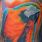 orange green - Parrot Tattoo
