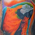 orange green - Parrot Tattoo