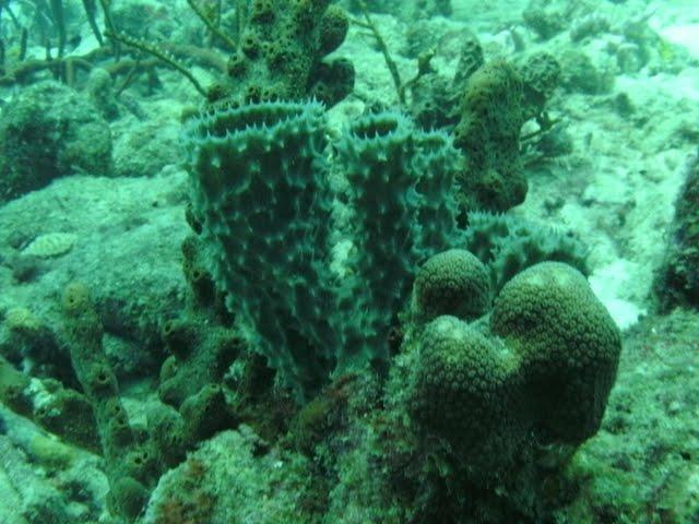 Bonaire 2011 - PICT0024.JPG
