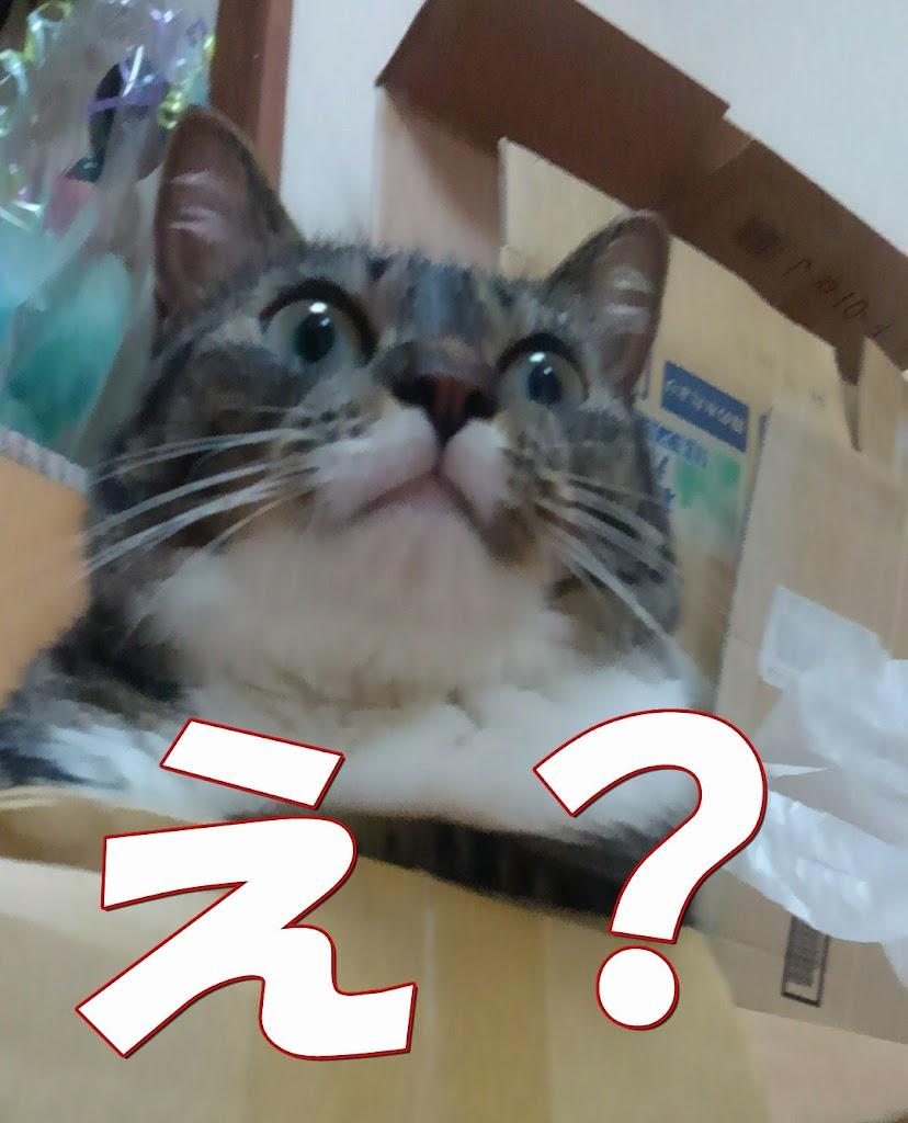 顔を上げた猫