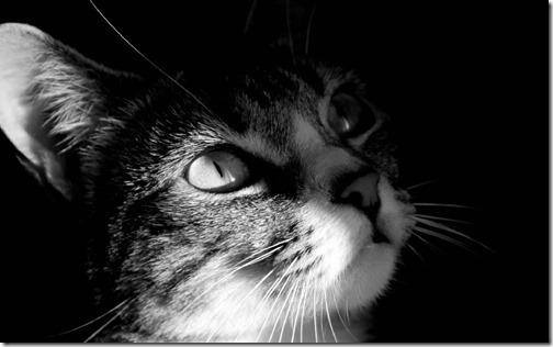 fotos de gatos (32)