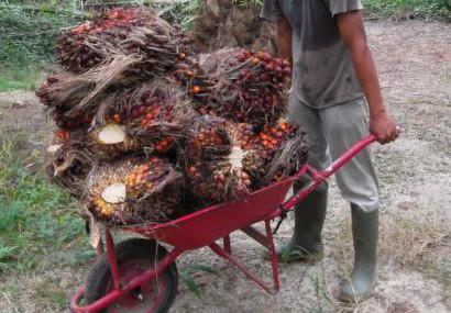 Angkong sawit