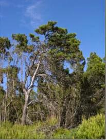 pineta Maddalusa