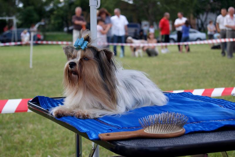 Wystawa psów - dsc00407.jpg