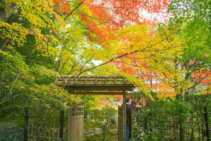 京都 天授庵 紅葉 写真2