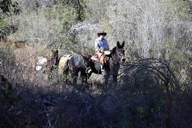 Richard's mules