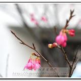 櫻花與福袋 - DSC_0108.jpg