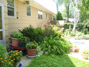 Photo: back of house near the patio