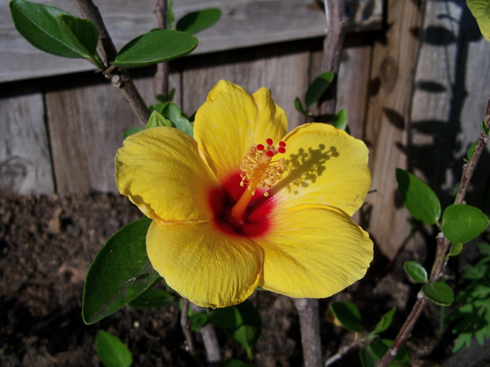 Gardening 2011 - 100_7475.JPG