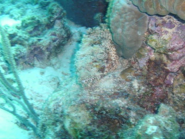 Bonaire 2011 - PICT0140.JPG