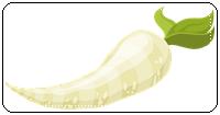 คำศัพท์ภาษาอังกฤษ_radish_Vegetable