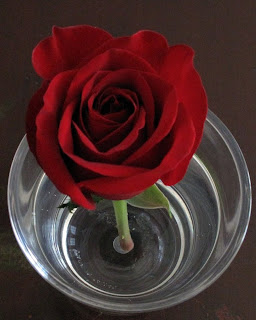 How many petals are on a rose?
