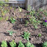 Gardening 2011 - 100_6621.JPG