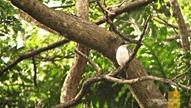 Corregidor Birdwatching