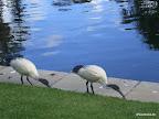 Lustige Vögel 2