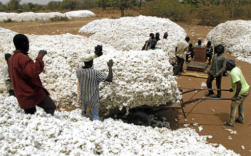 Farmers work at a cotton market in Soungalodaga village near Bobo-Dioulasso, Burkina Faso, in March 2017. Picture: REUTERS