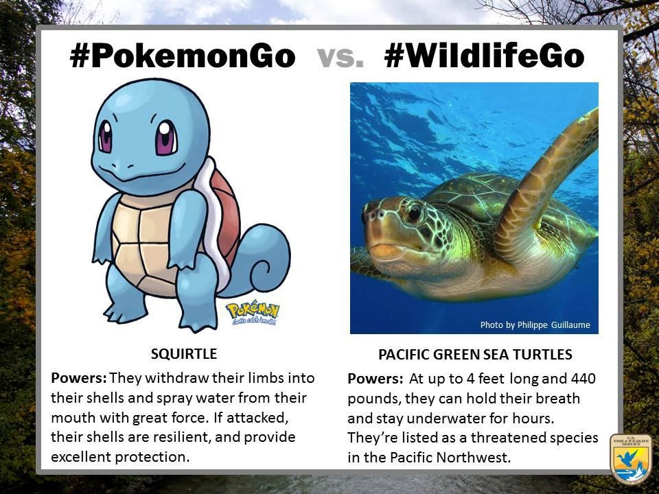 pokemongo-vs-wildlifego-14