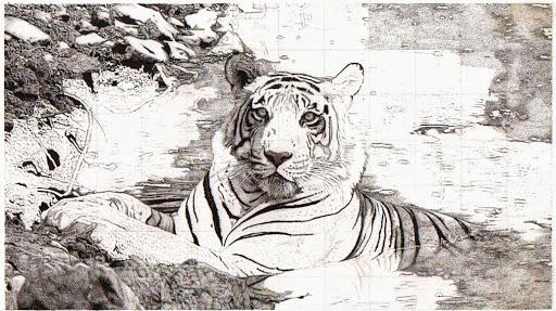 tigerupdate-2015-02-20-18-53.jpg