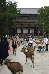 Deer in Nara-koen near Nandaimon Gate