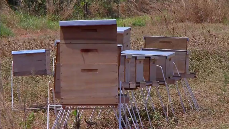 apicultura-deciolandia-3-1024x576