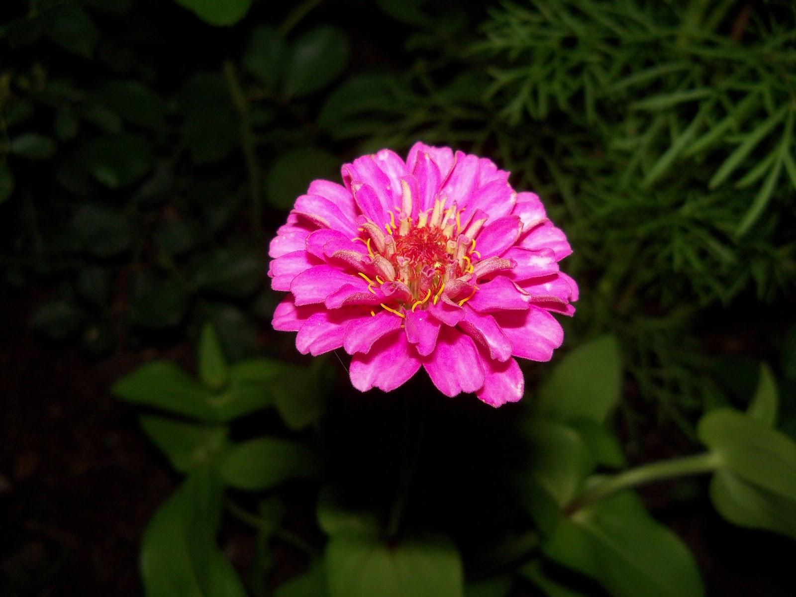 Gardening 2010, Part Two - 101_2521.JPG