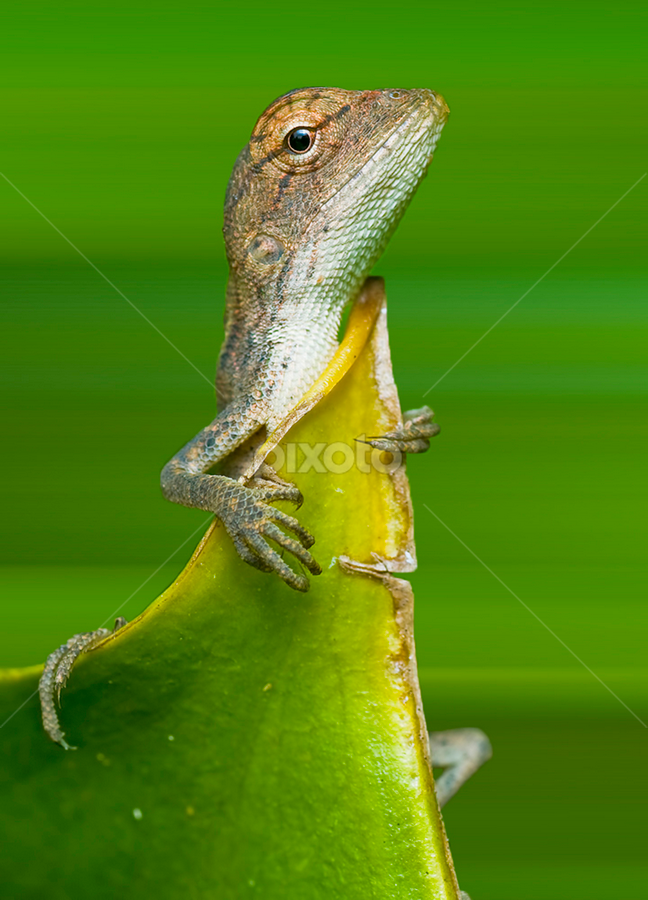 Besides by Pak Lang - Animals Reptiles ( macro, green, malaysia, closeup, animal,  )