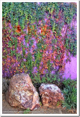 151230_Tucson_Tohono-Chul-Park_0032