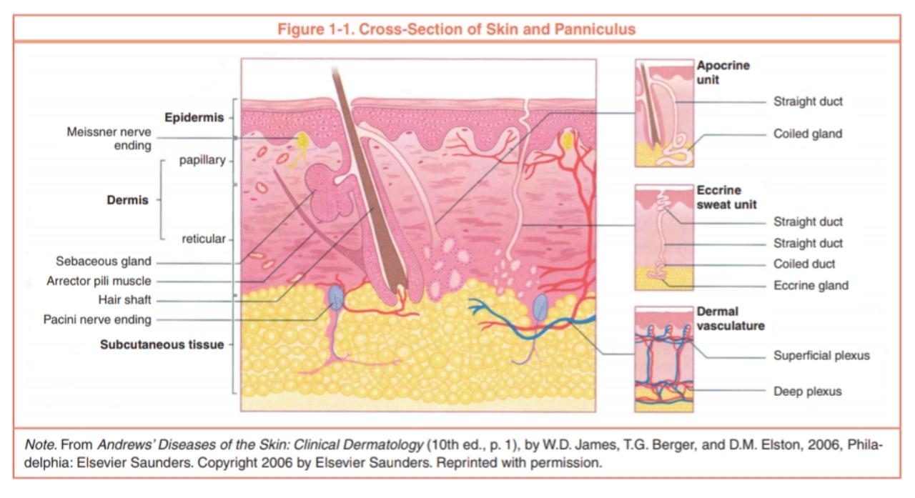 Fisiologi Dan Fungsi Kulit Pada Tubuh Manusia