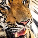Animal 023_1280px.jpg
