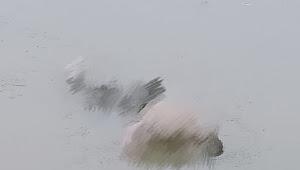 Kaget, Warga Temukan Mayat Terapung Di Kali Tarum Timur
