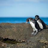 galapagos - Galapagos_FB-135.jpg