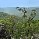 La forêt aux environs de Kuring-gai, New South Wales (Australie), 16 septembre 2009. Photo : Barbara Kedzierski