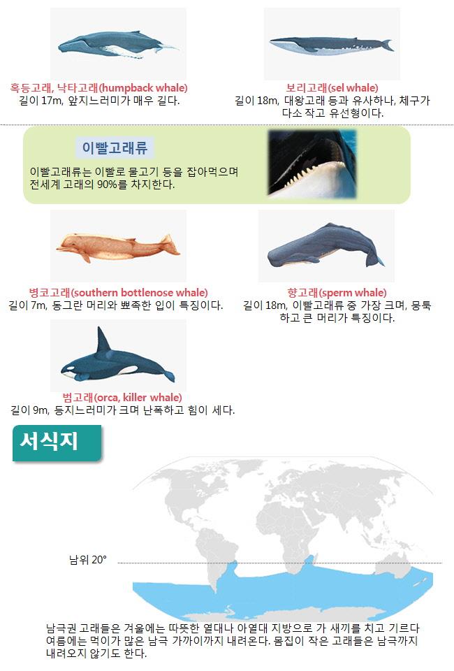 인포그래픽 고래2