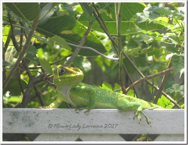 04-21-green-lizard