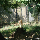 Pittsburgh Zoo Revisited - DSC05080.JPG