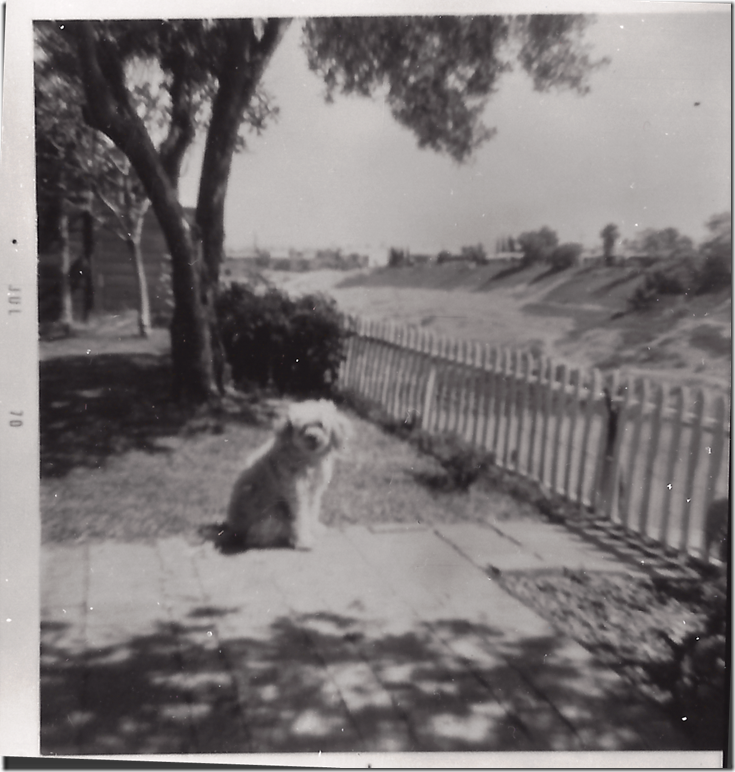 Gypsy_our little cockapoo_Jul 1967_Monarch St backyard_San Diego California