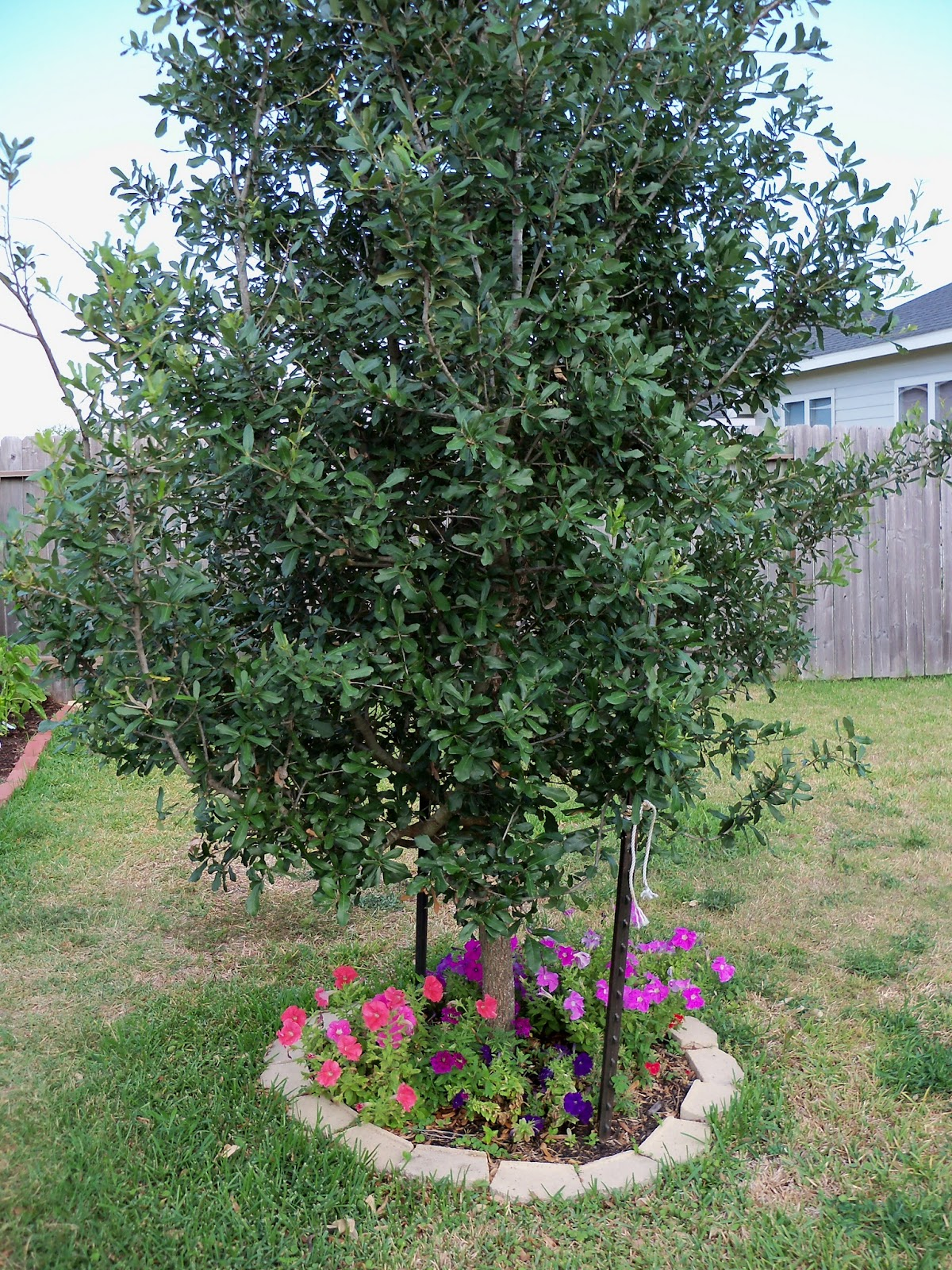 Gardening 2011 - 100_8825.JPG