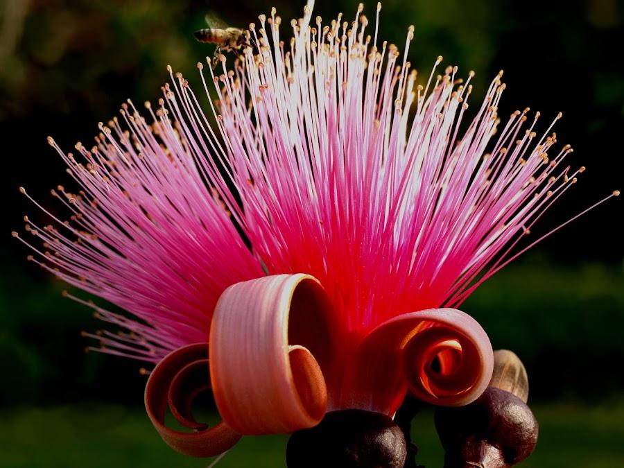 Bee by Vanessa Lazzarini - Nature Up Close Flowers - 2011-2013 ( pwcmovinganimals-dq, flower, nature, flowers )