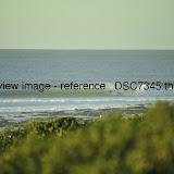 _DSC7345.thumb.jpg