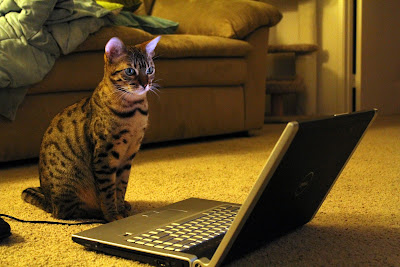 Penny the Bengal Cat Studying