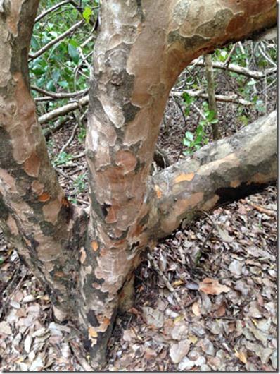 camophlage tree